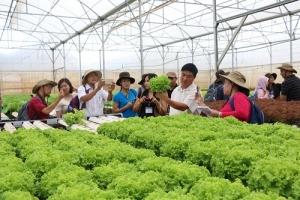 Trải nghiệm với sản xuất nông sản sạch